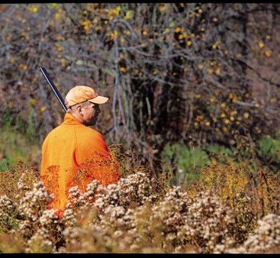 11 tips for hunting ruffed grouse