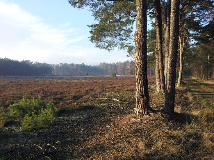 Natuurgebied 't Lutterzand. Een prachtig stuk natuur, deze foto is genomen aan de westkant van 't Lutterzand. www.lutterzand.nl