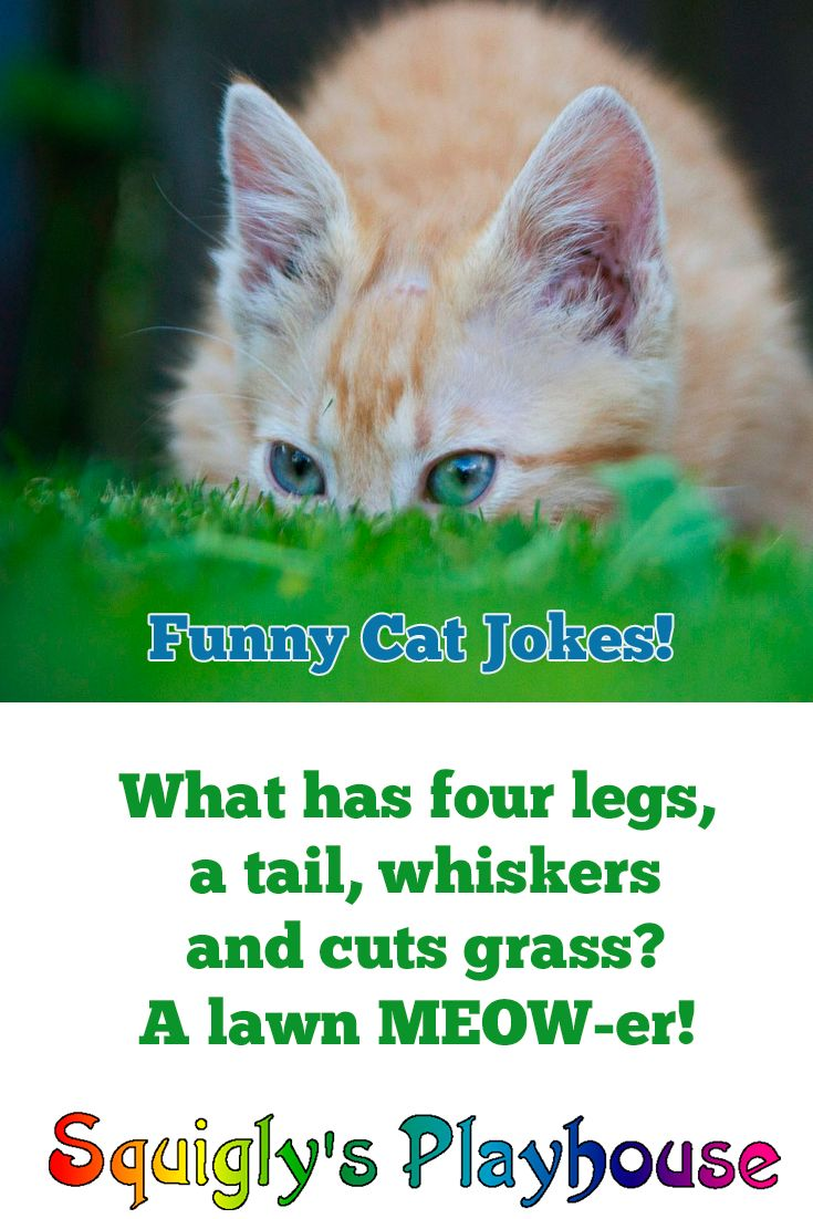 35 best Riddles Jokes Knock Knocks and Other Funny Stuff for