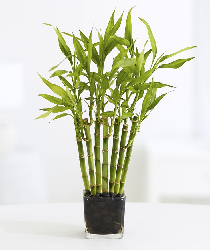 10 Plants You Can't Kill: No Green Thumb Needed | ProFlowers Blog