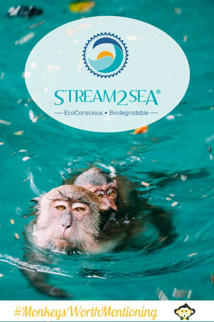 Have you met this month's Monkeys Worth Mentioning?  The Stream2Sea team is on a mission to save our coral reefs by offering the only sunscreen products safe for ALL marine life!  They also offer eco-friendly, biodegradable shampoo, bodywash, conditioner and lip balm...  Support their journey by following their social media and trying their outstanding products!