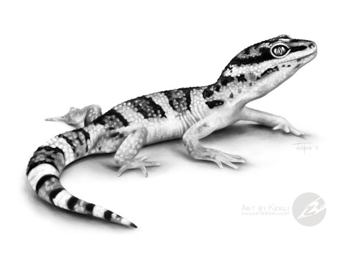 stripes dots leopard gecko graphite pencil drawing by kerli toode art