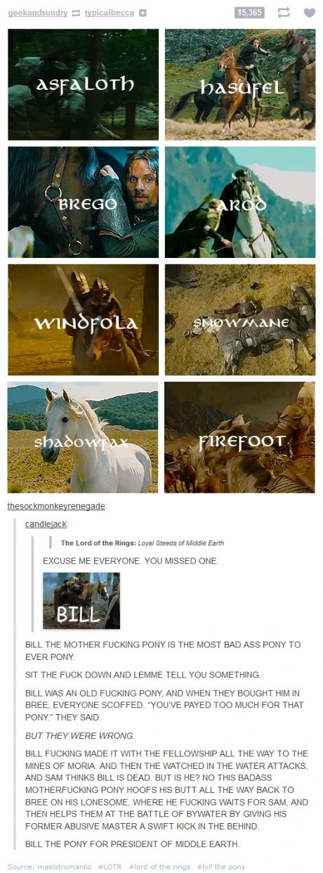 I dont like the cussing, but that is so funny!and awesome. and true! BILL THE PONY FOR PRESIDENT OF MIDDLE EARTH
