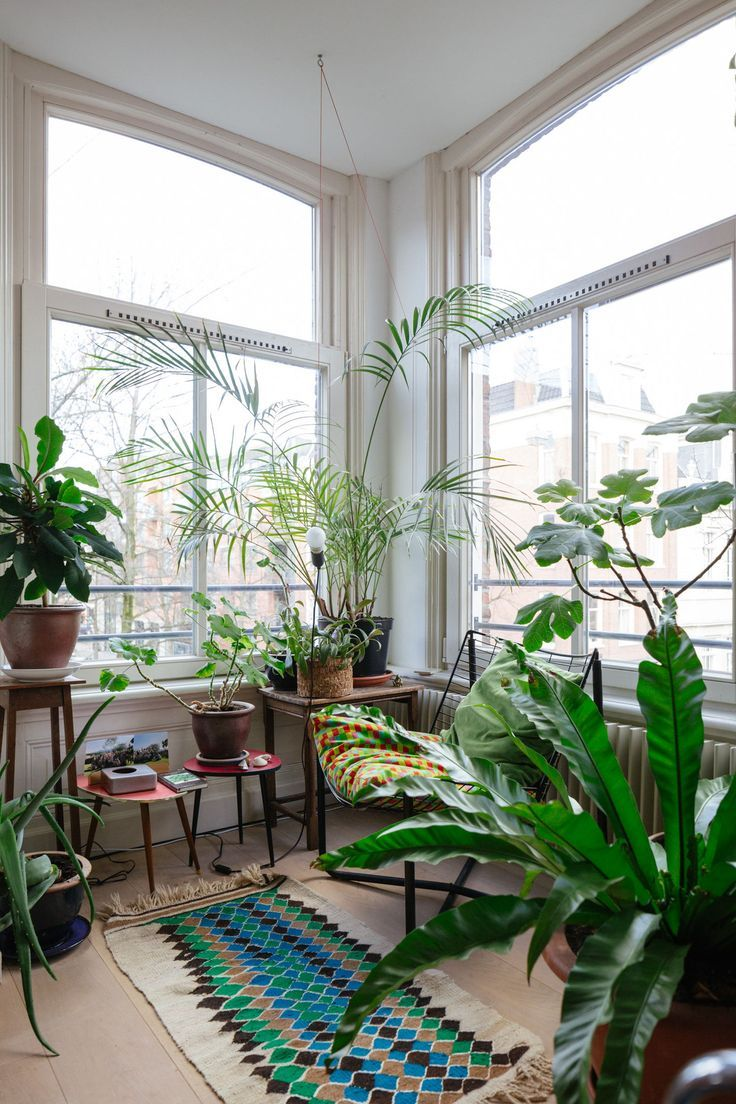 25 Best Plant Rooms Ideas On Pinterest Plants Indoor