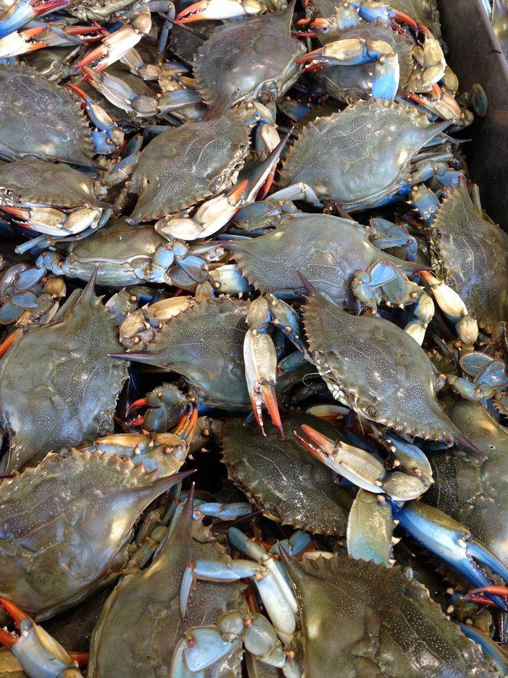 17 best images about food travel adventures seafood on for Blue crab fishing