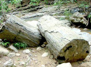 xilópalo madera petrificada