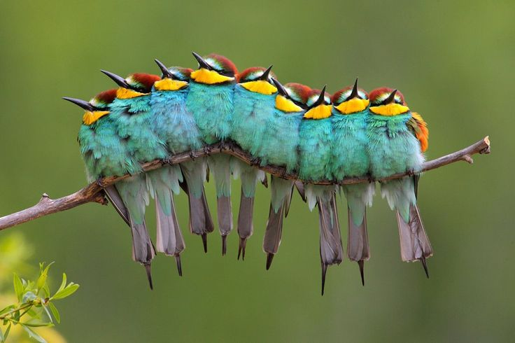 Nine beautiful birds sitting on one branch look like a colourful caterpillers