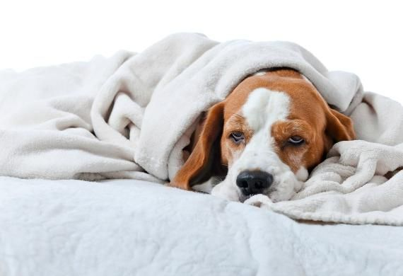 5 Reasons Your Pet is Lethargic (and When to Worry) | petMD