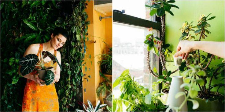 дрожжи для комнатных растений