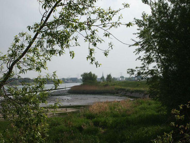 Natuur langs de Hollandse IJssel