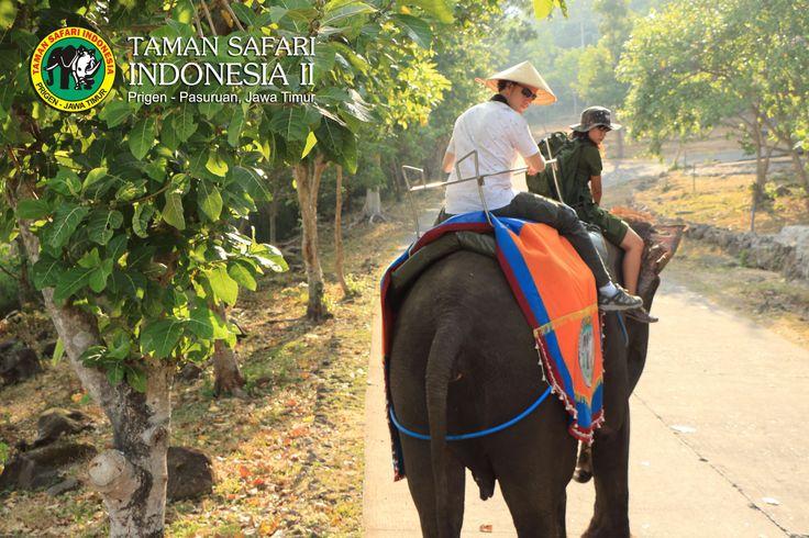 Feeling Wonderfull with Elephant Journey...Only in Safari Park II Indonesia...#tamansafari2 #natgeo