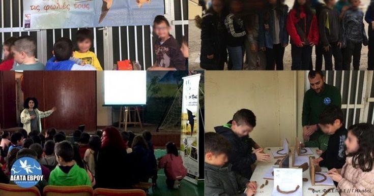 Ο Φορέας Διαχείρισης Εθνικού Πάρκου Δέλτα Έβρου σε συνεργασία με την Ελληνική Ορνιθολογική Εταιρεία διοργάνωσε για ακόμη μια χρονιά τα Χελιδονίσματα! Η εκδήλωση πραγματοποιήθηκε την Τετάρτη 5 Απριλίου στον προαύλιο χώρο του 4ου Δημοτικού Σχολείου Αλεξανδρούπολης και συμμετείχαν πάνω από 300 μαθητές του σχολείου.Διαβάστε τη συνέχεια