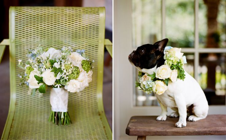 Can I have this dog at our wedding??: French Bulldogs Collars, Wedding Photography, Dresses Up, Bryans Photo, Dogs Day, Dogs Of Honor, Weddings, Dogs Flower Collars, Cute Pet