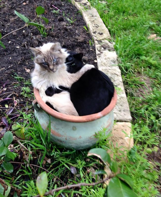 18photos that prove cats are actually fluffy plants