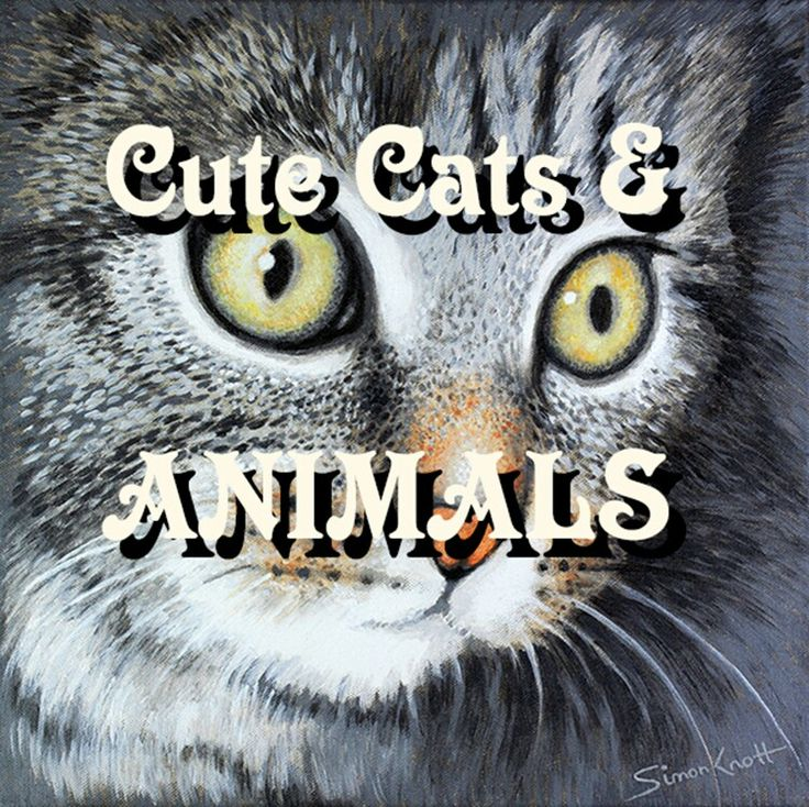 Cute cats kittens dogs and #Animals Art
