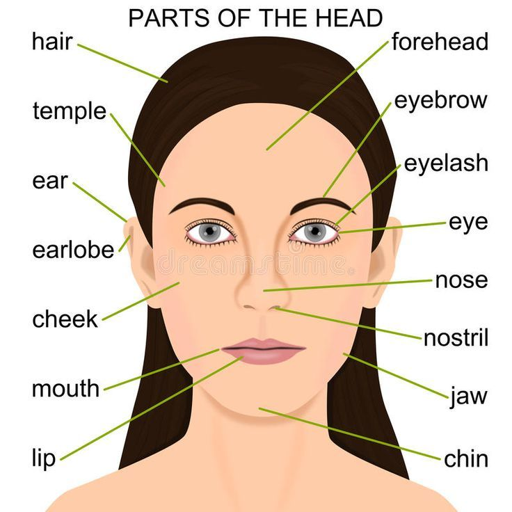 Learn English with Oxford English Academy: Parts of the Head