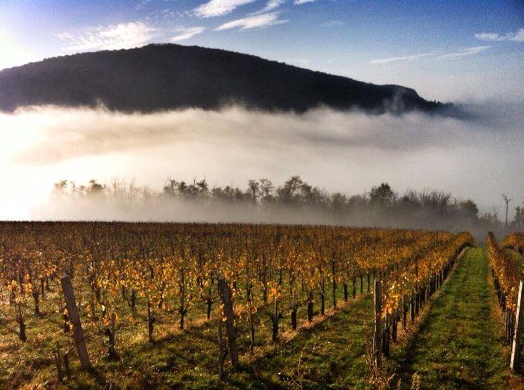Gere Winery, Konkoly vineyard, Villány, Hungary.