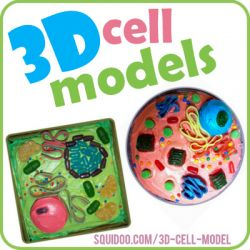 157 best 3d cell model science project images on pinterest school how to create plant cell and animal cell models for science class ccuart Choice Image
