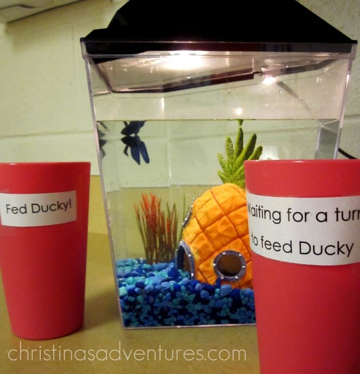 Classroom Pet Ideas : Autism classroom organization pets ideas and