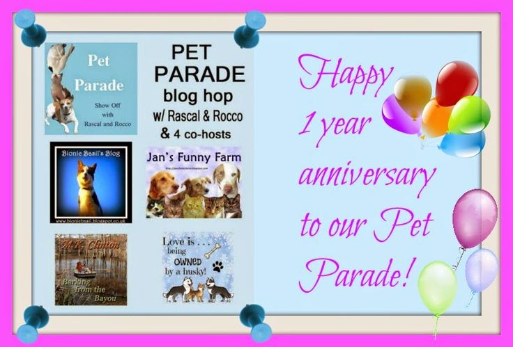Love is being owned by a husky!: Pet Parade 1 year anniversary HUGE giveaway!!