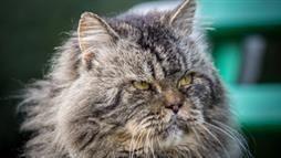 consejos para el gato mayor