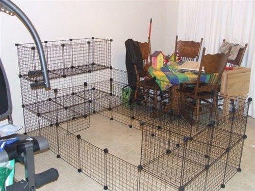C&C Cage for Flemish Giant - BinkyBunny.com - House Rabbit ... - photo#26