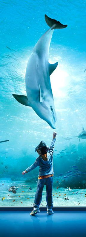 Peek into the aquatic life at these most amazing aquariums across USA. Use TripHobo Trip Planner to plan your trip.