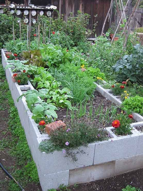 raised garden bed with concrete blocks-lasts longer than wood. I'd love to do this and paint or stain the blocks some viberent colors.: