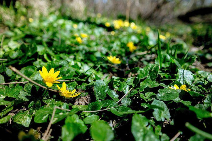 Bújócska...Long-erdő természetvédelmi terület,Sárospatak környékén...