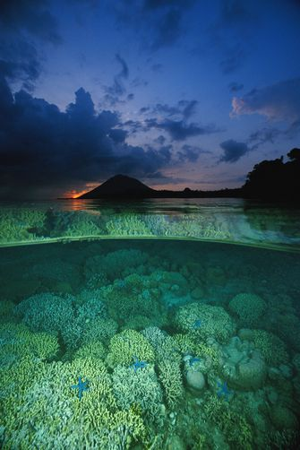 Coral Reef at Bunaken Island, North Slaws, Indonesia • photo: Fred Bavendam