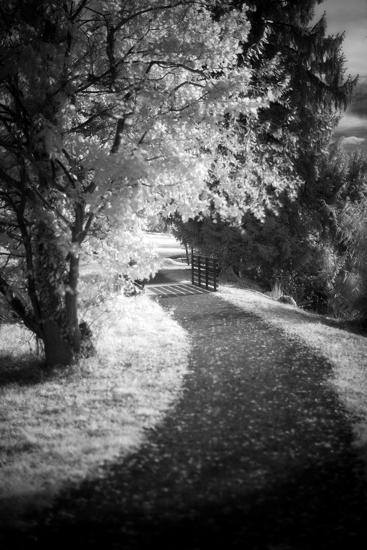 Infrared digital photography goes to University of Zurich: Können uns Pflanzen sehen? >>> Check out tips on photography by visiting the link.