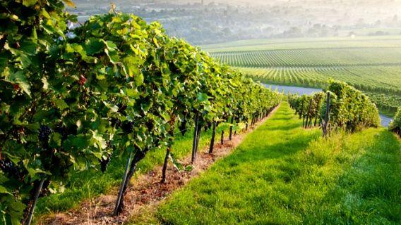 Les plus beaux vignobles du Québec. Le Domaine de Lavoie en fait partie! #Montérégie