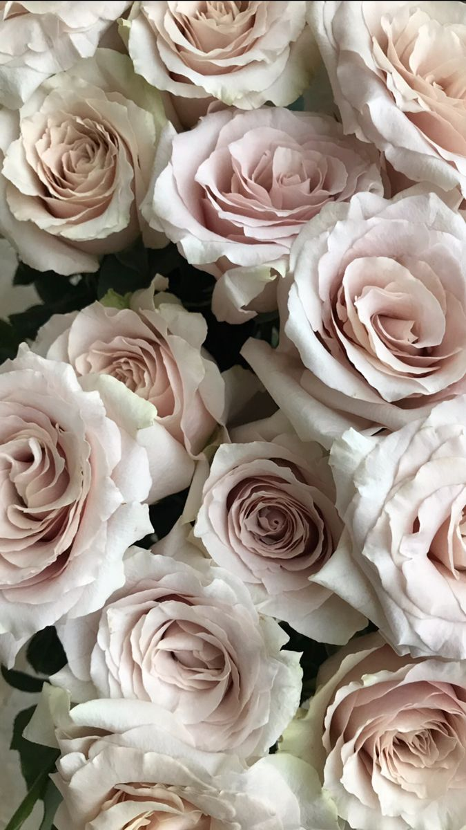 Buy Quicksand Rose On Wholesale Prices in 2020 Rose