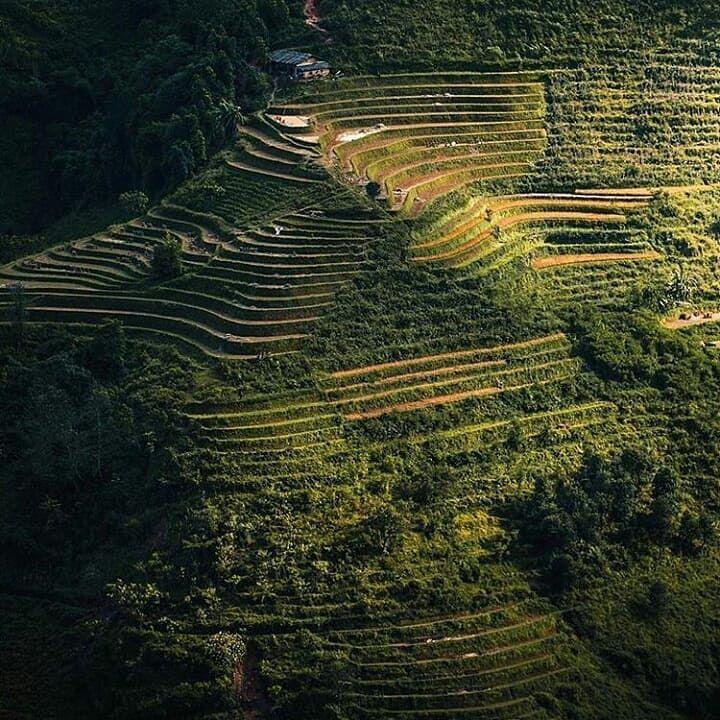 المدرجات الزراعية في فيتنام والتي تشبه مدرجات عسير سفر سياحة مناظر طبيعيه رحلات فنادق حجوزات فيتنام Travel Tourism Attractions Hotels Holidays F