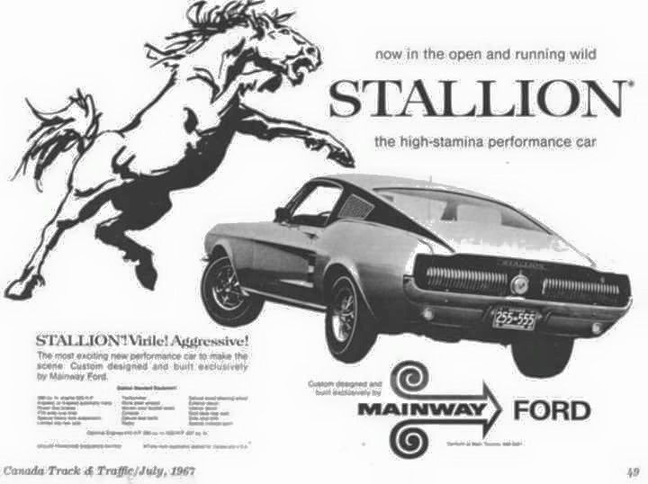 1967 Canadian Special FORD Stallion... The 1967 FORD Stallion was a special Promotion Mustang offered from the Toronto based Mainway Ford Dealership... Only 8 were made with 4 equipped with a Hi PO 289ci and 4 equipped with a 390ci powerplant... It came with special paint, Stallion emblems, rear Cougar Taillights and Special Vinyl side treatments. #mustangvintagecars