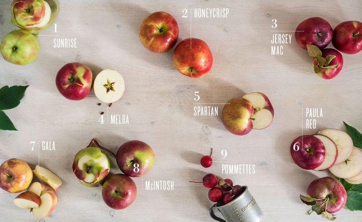Apple-picking season: a handy guide - Part 1
