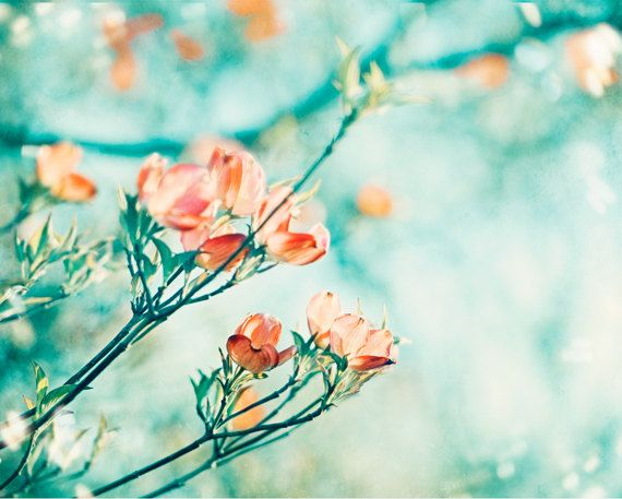 "Coral, Turquoise Photography - flower aqua orange teal peach blue mint floral print dogwood photograph nature wall art, ""Blossoming Faith"""