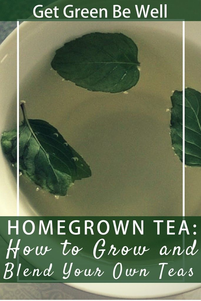 Make Your Own Tea - It's Way Easier Than You Think!