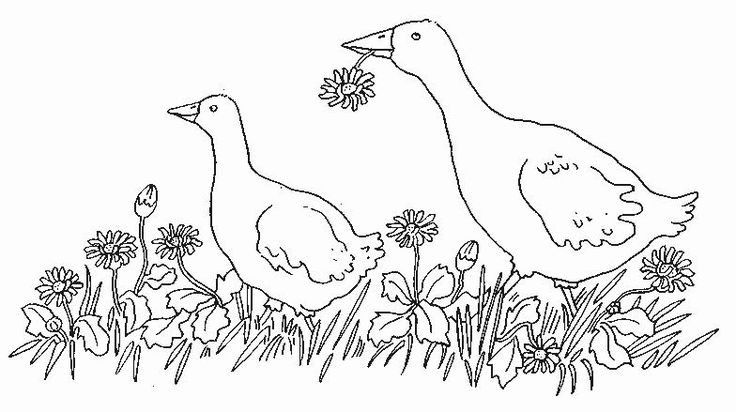geese Adult coloring pages