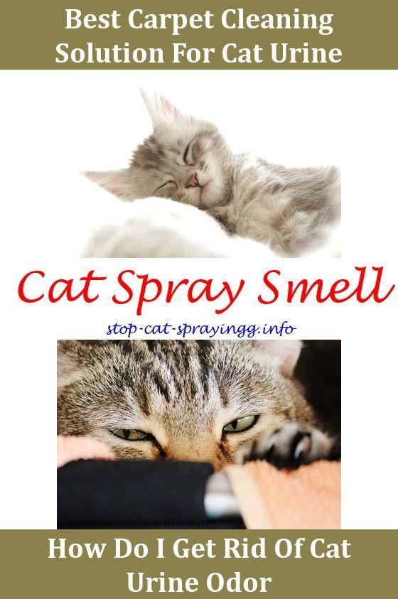 cat spraying pee in litter box