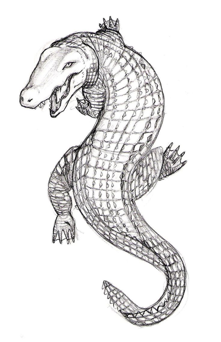 45 Best Crocodile Tattoo Outline Images On Pinterest