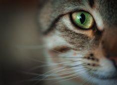 Closeup of tabby cat face stock photo