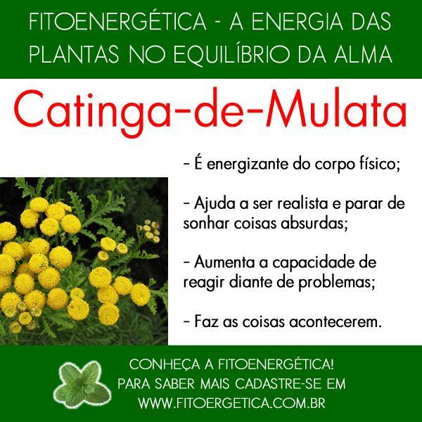 Catinga-de-Mulata