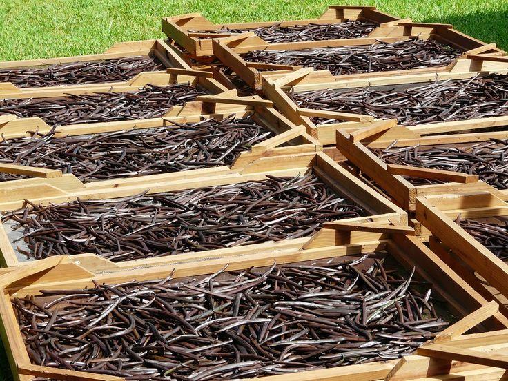 6 Health Benefits of Vanilla Oil - Natures Happiness Blog - News, Tips, Reviews & Recipes