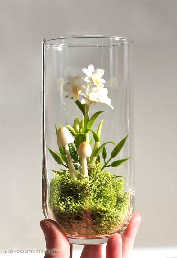 """A tiny 3″ creamy white Dendrobium orchid, each petal hand sculpted of the finest Japanese clay, encased in a 6″ tall and 3"""" round glass vase and planted on a bed of vibrant preserved moss with miniature handmade mushrooms.  www.etsy.com/listing/96049148/exotic-dendrobium-orchid-te..."""