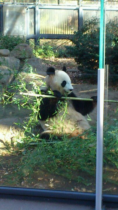Goodbye Hong Kong! Ima go see pandas in Japan! ^_^