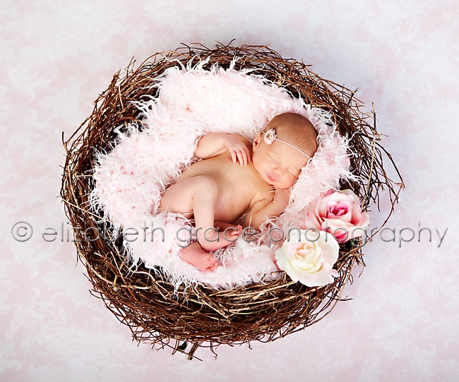 Newborn nest photography by elizabethgracephotography com