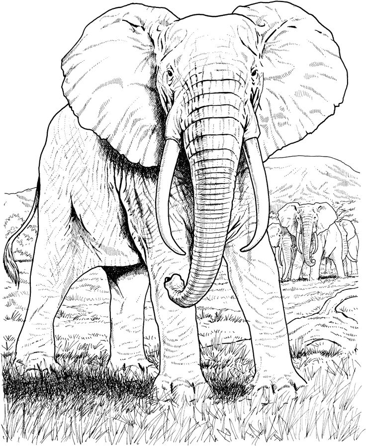 African Elephant Coloring Page From Elephants Category Select 25105 Printable Crafts Of Cartoons Nature Animals