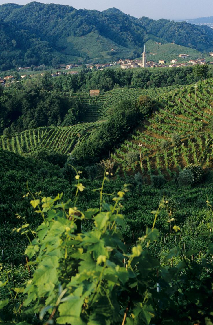 It's sparkler season: Touring Italy's Prosecco Road