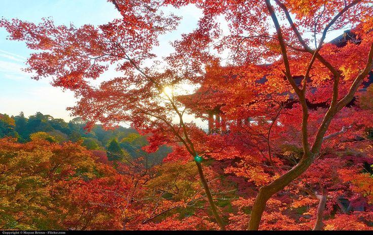 Kiyomizu-dera in Kyoto during autumn